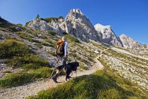 How Far Can a Dog Hike in a Day?