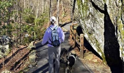 Can You Hike With Dogs in National Parks?