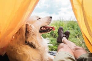 57 Tips For Camping With a Dog (Epically Helpful Guide)