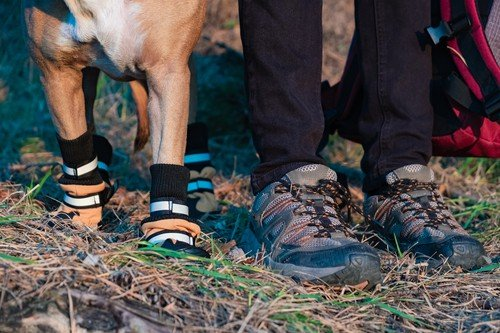 long distance hiking with dogs