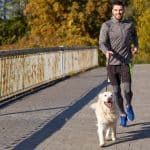 How To Train a Dog To Be a Running Partner (Breeds, Age and Running Conditions)