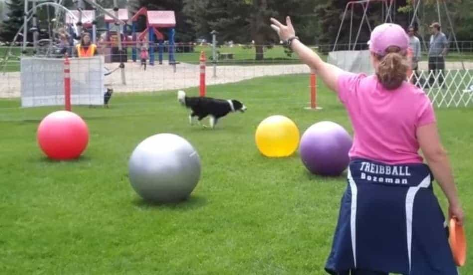 treibball-for-dogs
