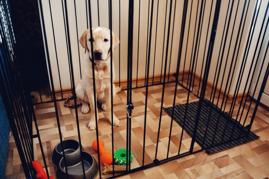best toys for puppy in crate