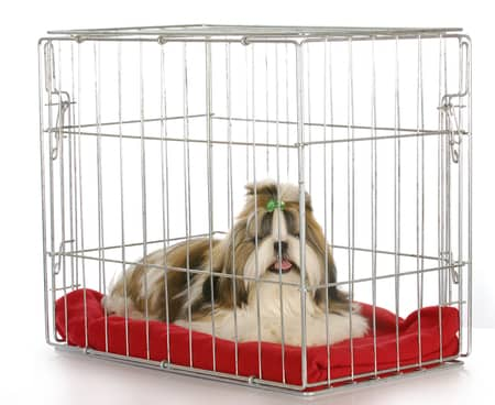 best crate for a dog with separation anxiety