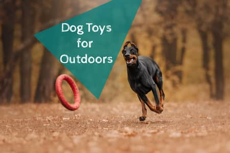 outdoor dog toys to keep them busy