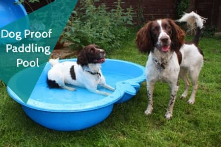 dog proof paddling pool