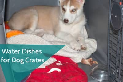 water dishes for dog crates