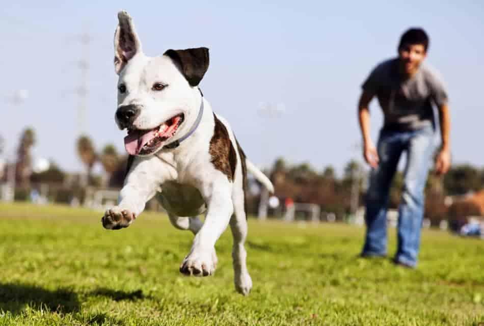 velcro ball for dogs
