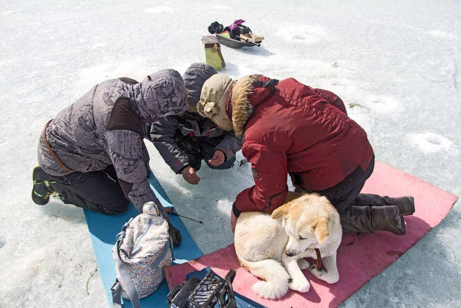 best dog boots for ice fishing