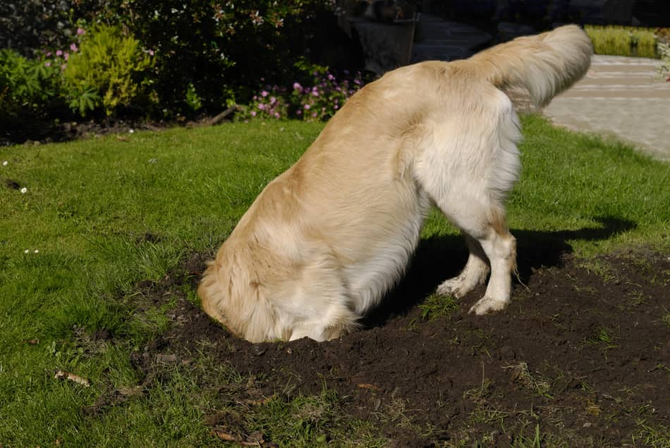 toys for dogs that like to dig your yard