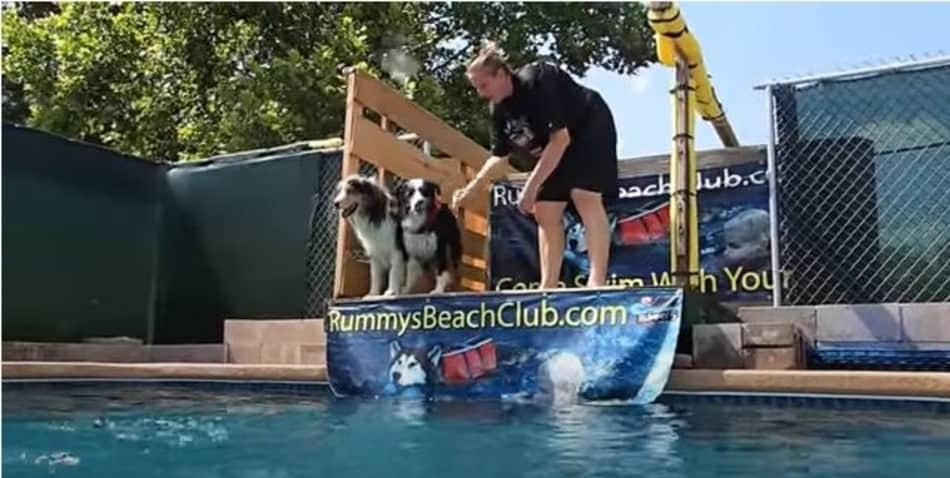 best dog breeds for dock jumping