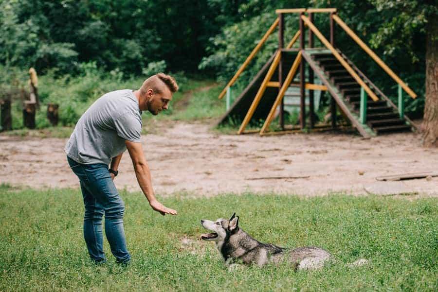how to train a husky